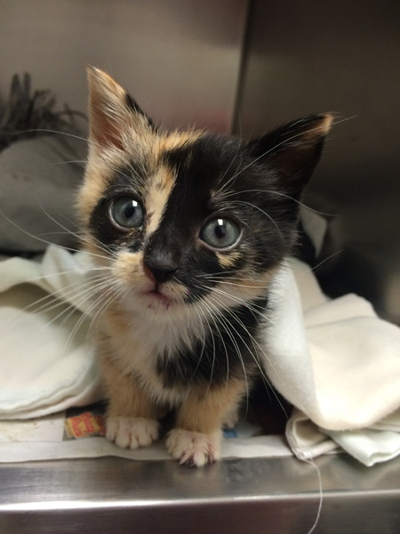 "<div class=""meta image-caption""><div class=""origin-logo origin-image wpvi""><span>WPVI</span></div><span class=""caption-text"">The three-week old kitten was found by trash collectors in Upper Darby in a bag with paint on her fur.</span></div>"