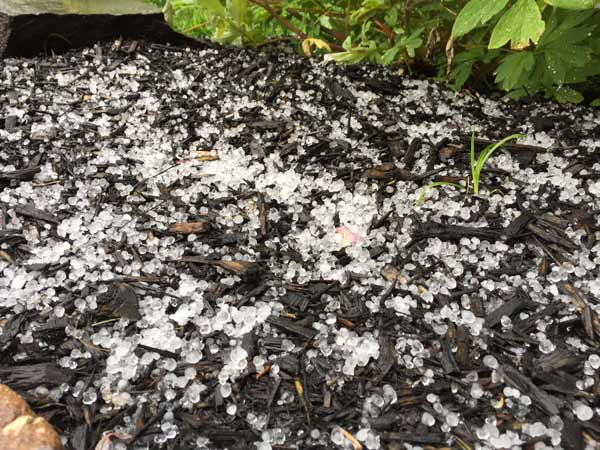 "<div class=""meta image-caption""><div class=""origin-logo origin-image wpvi""><span>WPVI</span></div><span class=""caption-text"">Action News viewer Kristen Lynn Lucas sent in this photo of hail from New Britain Township, Pa. </span></div>"