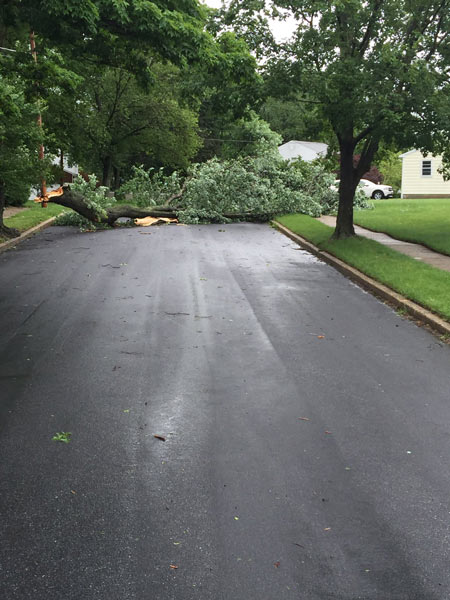 "<div class=""meta image-caption""><div class=""origin-logo origin-image none""><span>none</span></div><span class=""caption-text"">Action News viewer Angel Reyes sent in this photo of a downed tree on Peach Tree Lane in Cherry Hill, New Jersey.</span></div>"