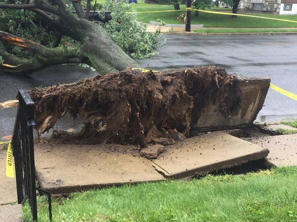 "<div class=""meta image-caption""><div class=""origin-logo origin-image wpvi""><span>WPVI</span></div><span class=""caption-text"">Action News viewer Danielle sent in photos of a tree that fell onto a car on the 7100 block of Whitaker Avenue in Northeast Philadelphia.</span></div>"