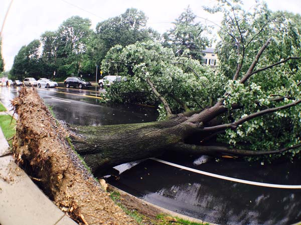 "<div class=""meta image-caption""><div class=""origin-logo origin-image none""><span>none</span></div><span class=""caption-text"">Action News photographer Dan Sheridan captured a large tree down on Ridge Avenue by Manatawna.</span></div>"