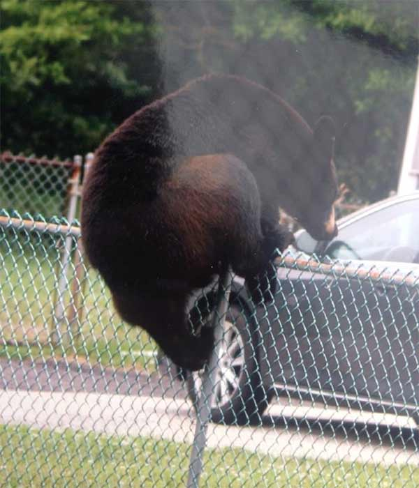 Police in Waterford, Camden County cautioned residents after a black bear was spotted in the area on Thursday, June 12, 2014. <span class=meta></span>