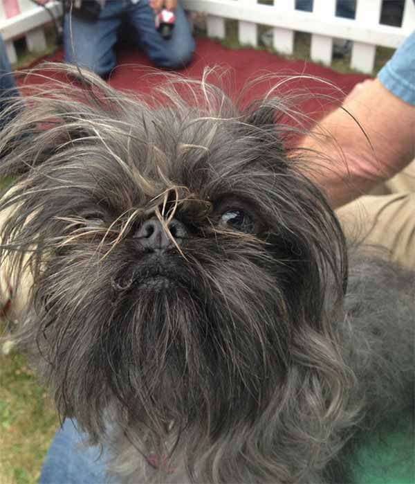 Monkey is one of the top dogs at this year's World's Ugliest Dog Contest at the Sonoma-Marin Fair, being held Friday June 20th in Petaluma, California. Who do you think will win?