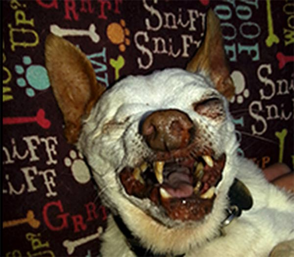 "<div class=""meta ""><span class=""caption-text "">Willie Bean Walker is one of the top dogs at this year's World's Ugliest Dog Contest at the Sonoma-Marin Fair, being held Friday June 20th in Petaluma, California.</span></div>"