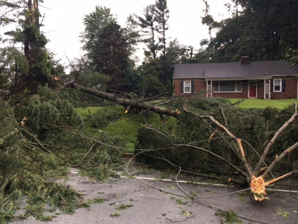 <div class='meta'><div class='origin-logo' data-origin='WPVI'></div><span class='caption-text' data-credit=''>13.	A tree fell on a vehicle on McKennans Church Road in Wilmington, Delaware.</span></div>