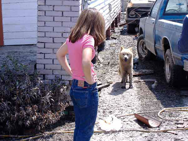 "<div class=""meta image-caption""><div class=""origin-logo origin-image none""><span>none</span></div><span class=""caption-text"">Another dog comes out as Nydia Han and Action News walk through the street of St. Bernard Parish. (WPVI Photo)</span></div>"