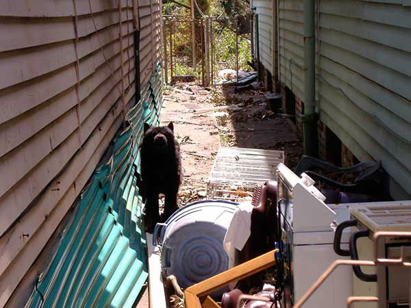 "<div class=""meta image-caption""><div class=""origin-logo origin-image none""><span>none</span></div><span class=""caption-text"">The residents of the hardest hit neighborhoods had to flee without their pets.  A week later, animal control officials went through the area. (WPVI Photo)</span></div>"