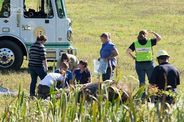 <div class='meta'><div class='origin-logo' data-origin='none'></div><span class='caption-text' data-credit=''>Pictured: The rescue of a horse from a mud pit on Chester County on Wednesday, October 5 (Courtesy: IrishEyez Emergency Services Photography)</span></div>
