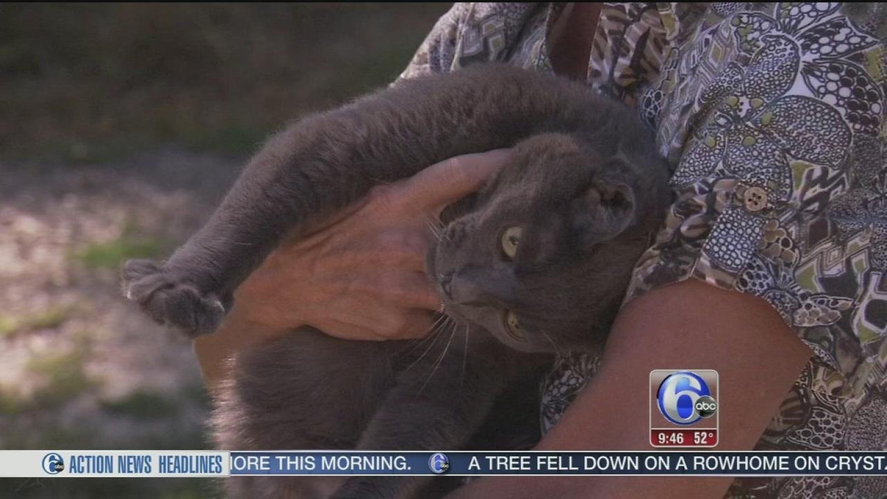 VIDEO: Shelter Me: Salem County Humane Shelter