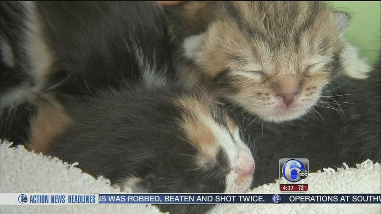 VIDEO: Kittens rescued from Delaware fire