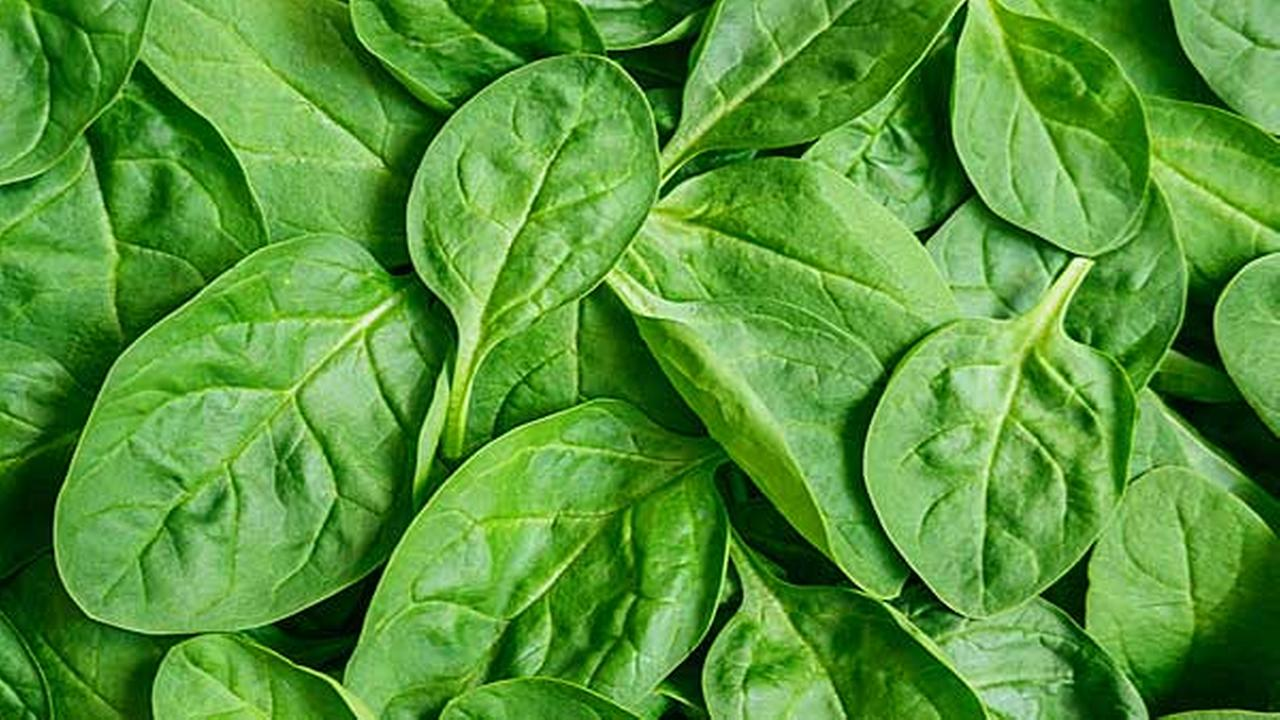 Dole recalls bagged spinach sold in Pennsylvania, New Jersey