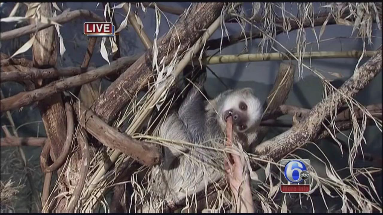 VIDEO: Cecily feeds Sandy the sloth