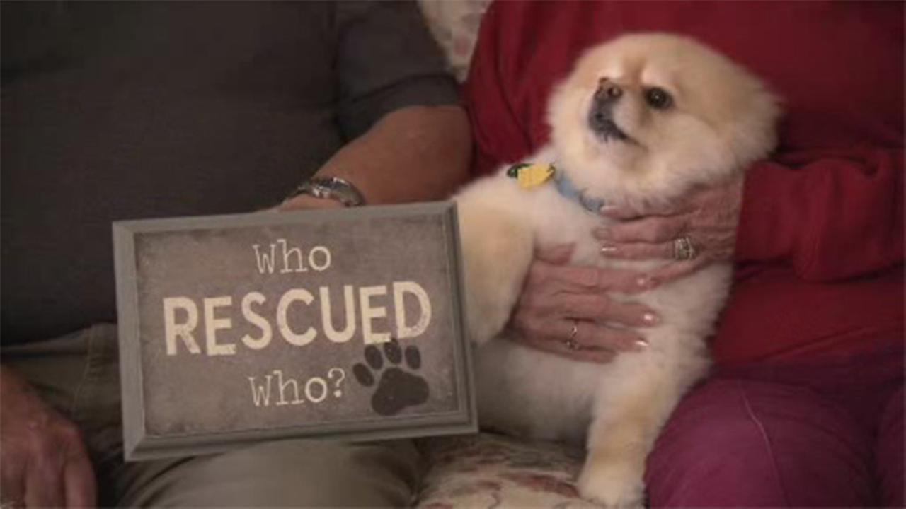 Shelter Me: Dianes Discount Pet Supplies