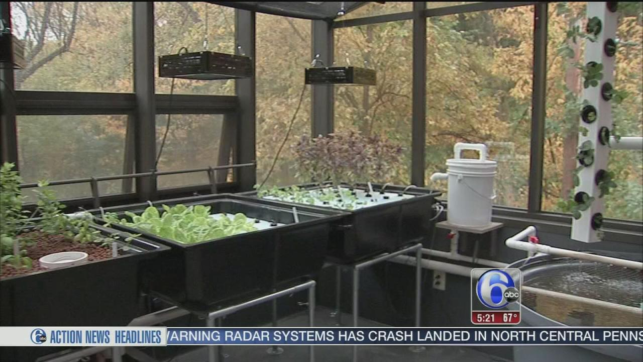 Studying the science of aquaponics