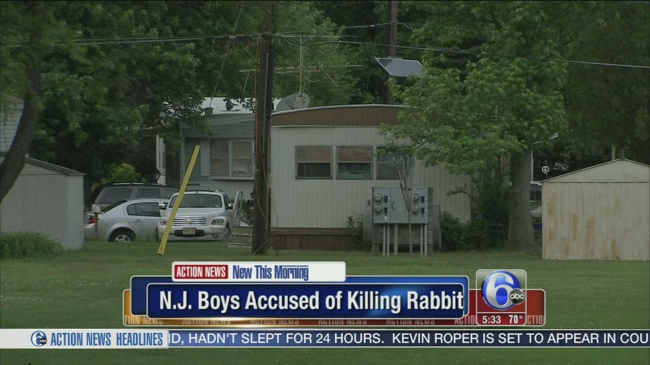 VIDEO: N.J. boys killed pet rabbit, police say