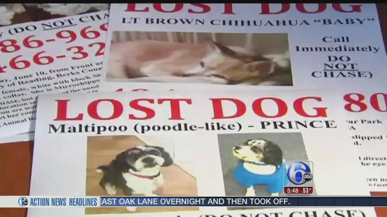 VIDEO: Mystery of missing dogs in Berks Co.