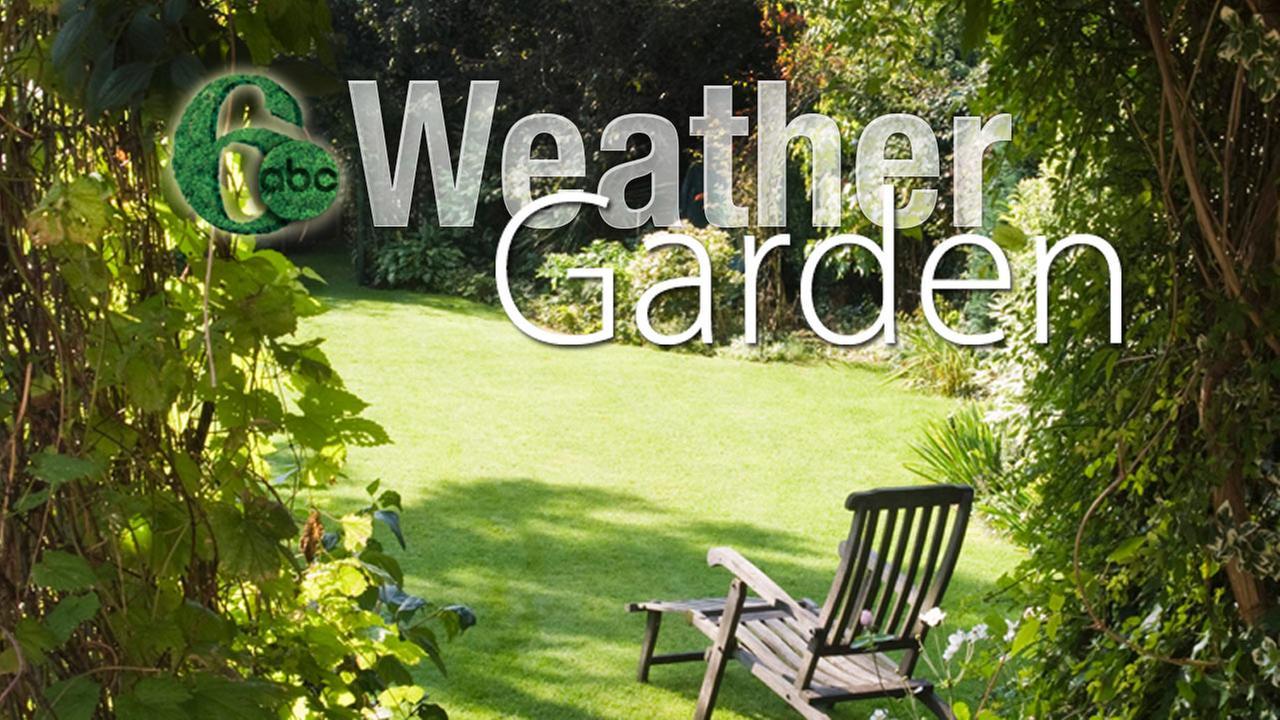 Action News Garden