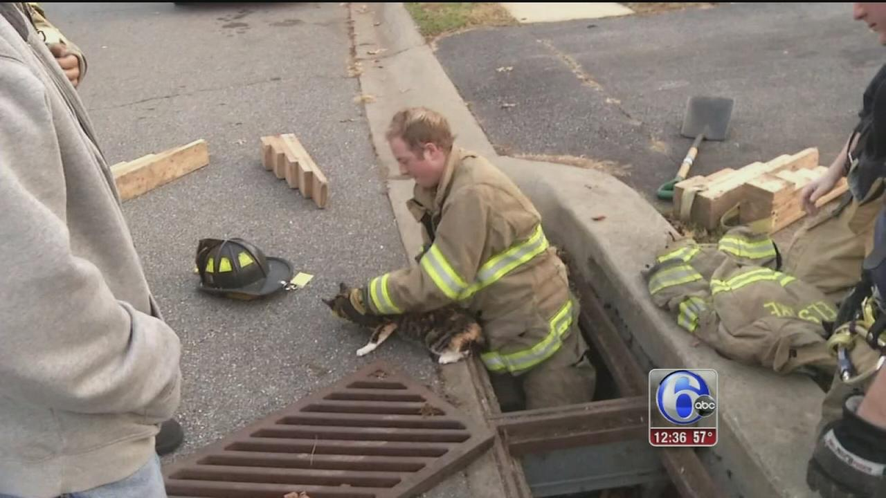 VIDEO: Cat rescued from storm drain in Delaware
