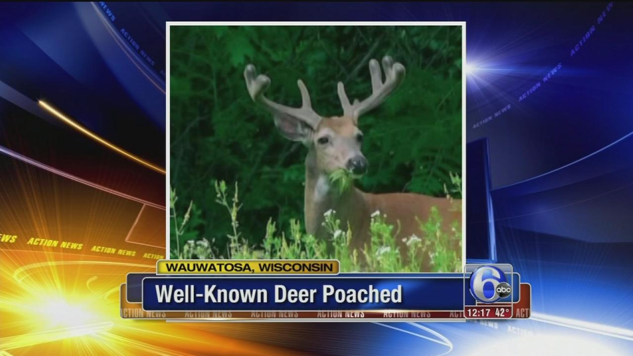 VIDEO: Bowtie deer poached in public park