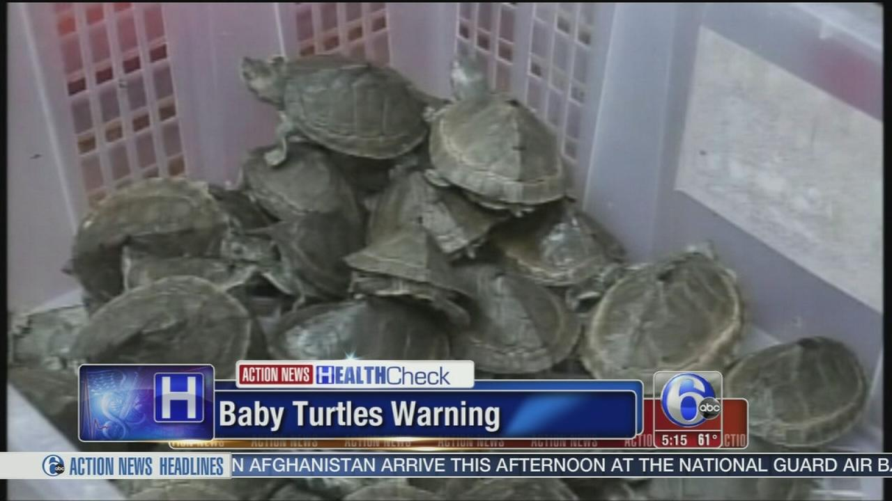 VIDEO: Baby turtles warning