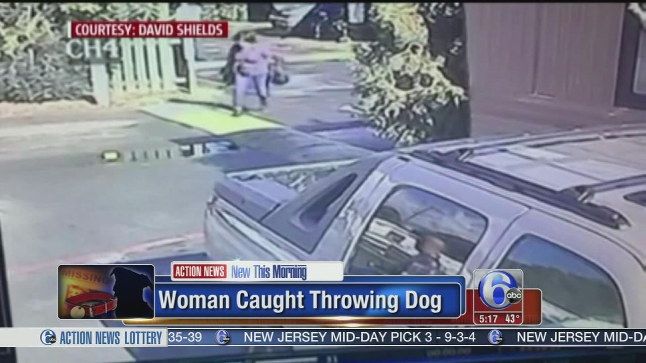VIDEO: Woman caught throwing dog