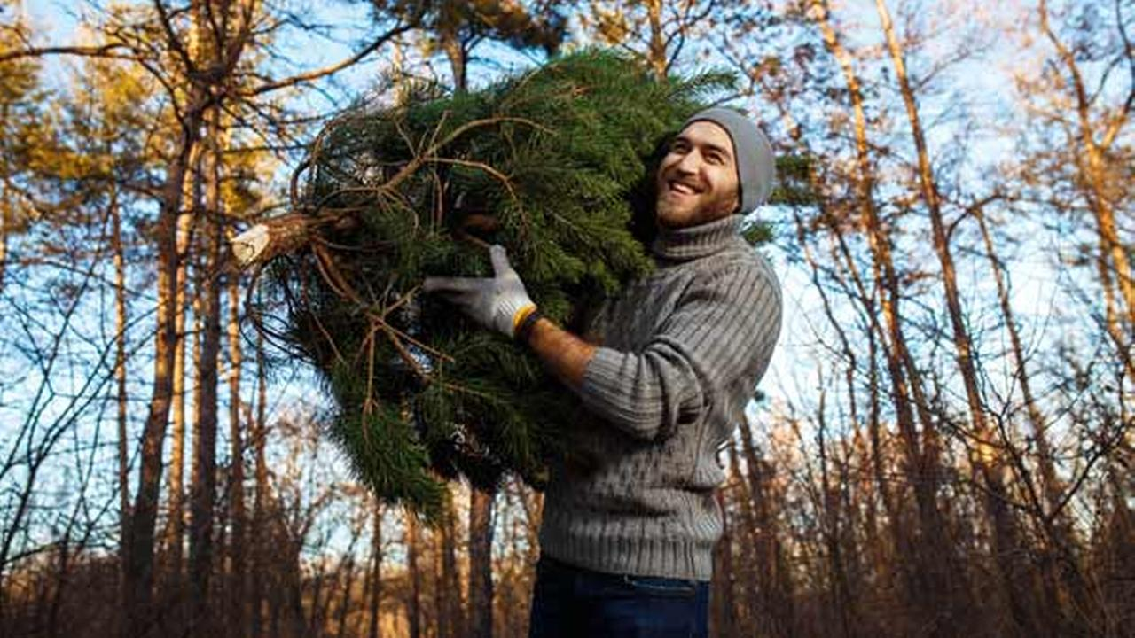 Philadelphia Streets Department announces Christmas tree recycling program