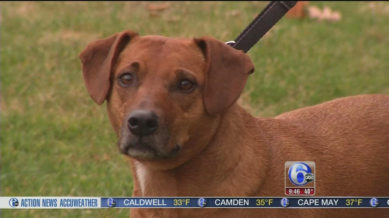 VIDEO: Shelter Me: Lulus Rescue
