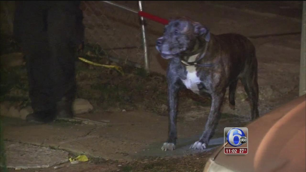 VIDEO: 2 women injured in Somerton dog attack