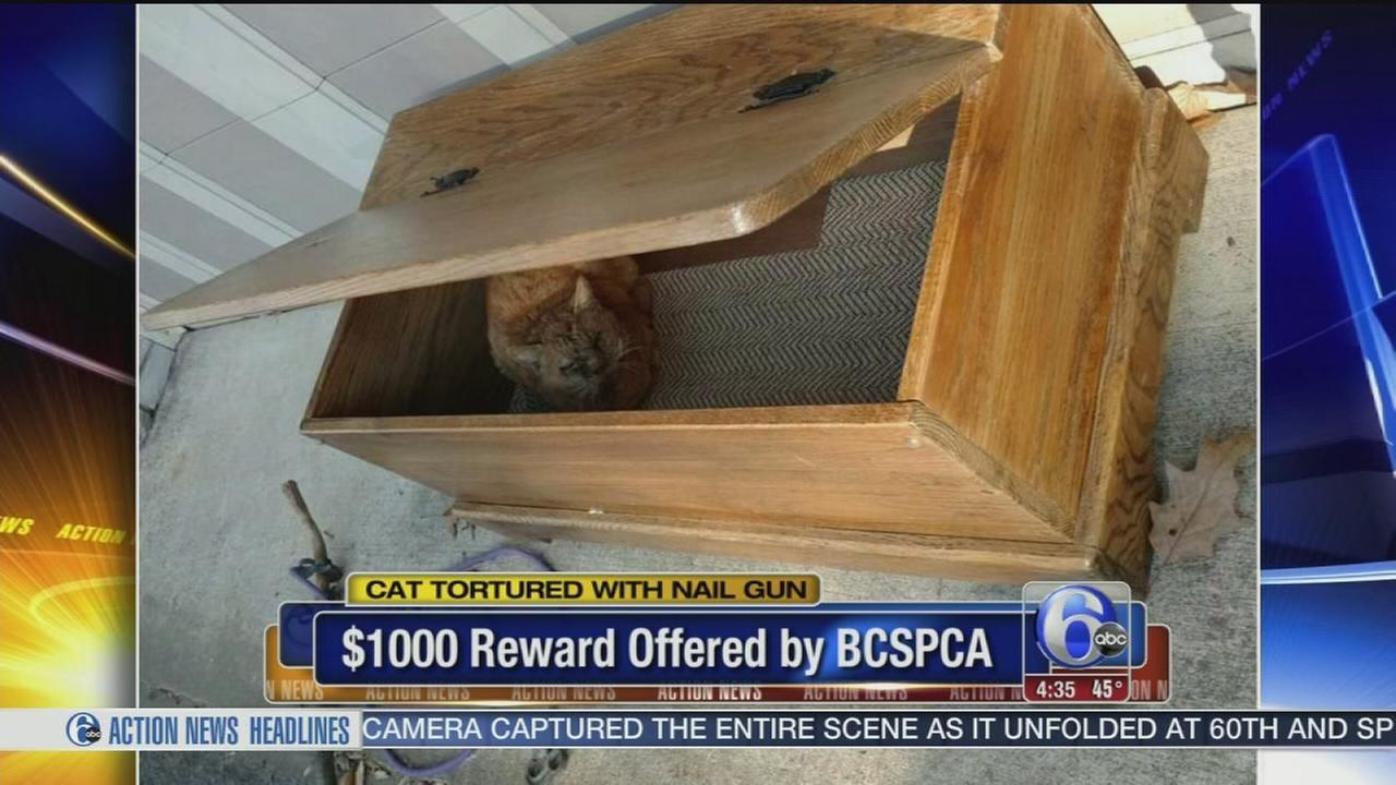 VIDEO; Cat tortured with nail gun in Doylestown