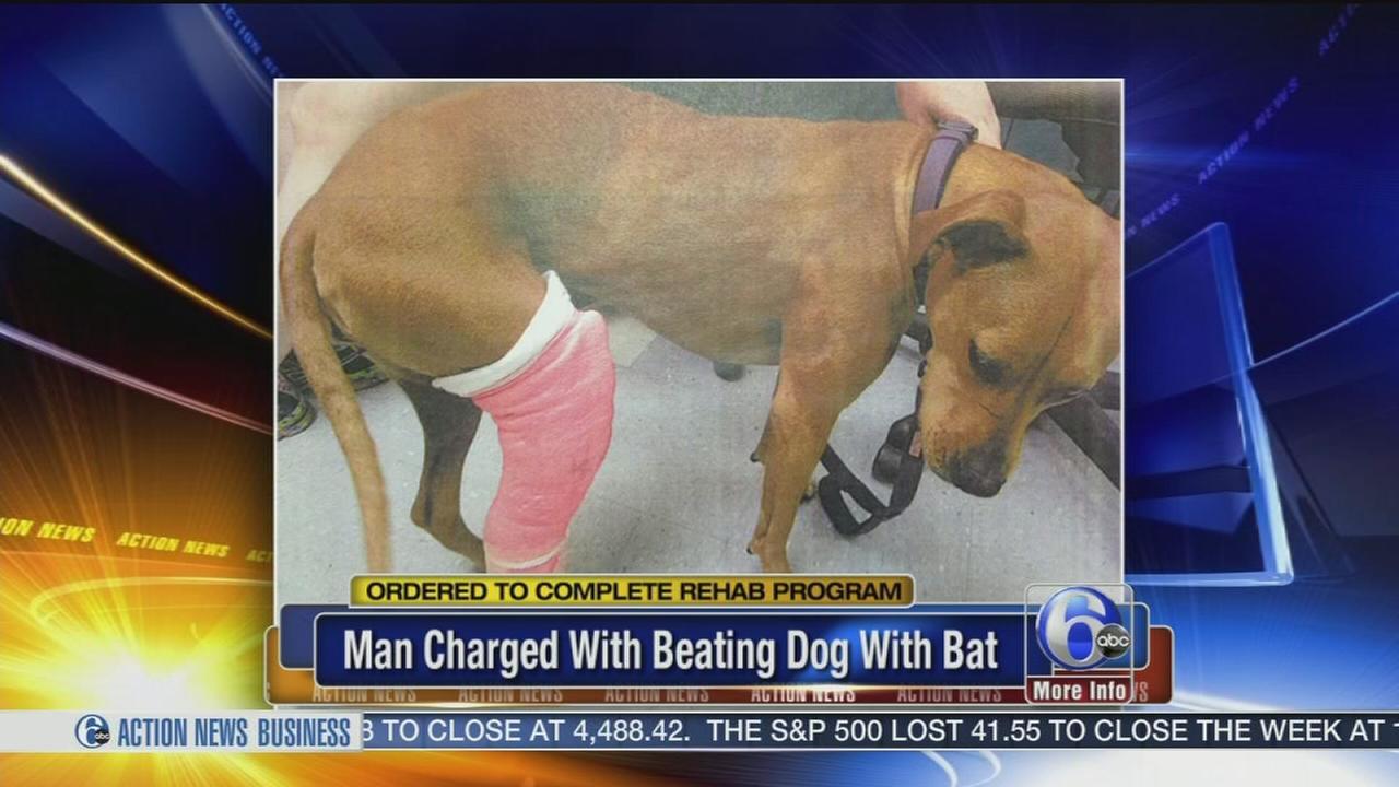 VIDEO: South Philly man ordered to rehab after hitting dog with baseball bat