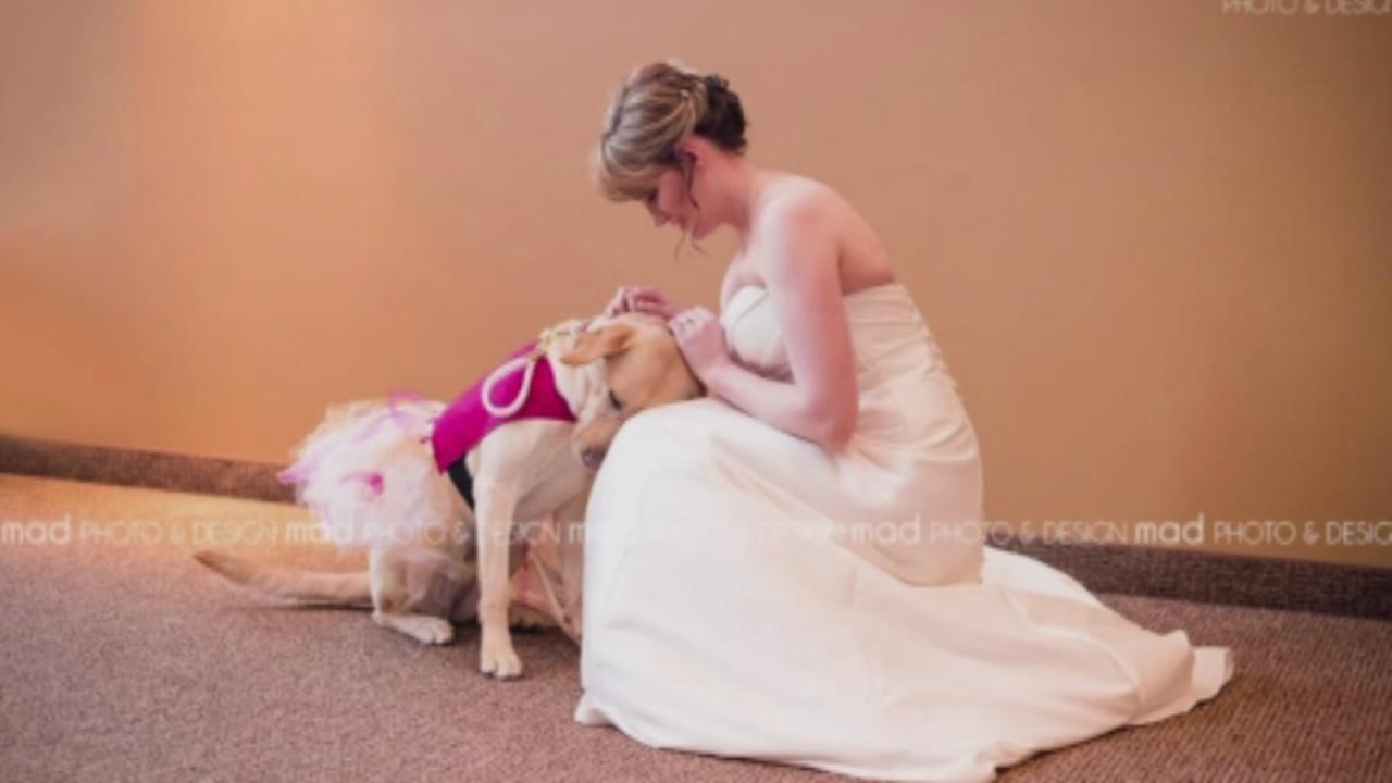 VIDEO: Viral photo captures service dog calming bride before wedding
