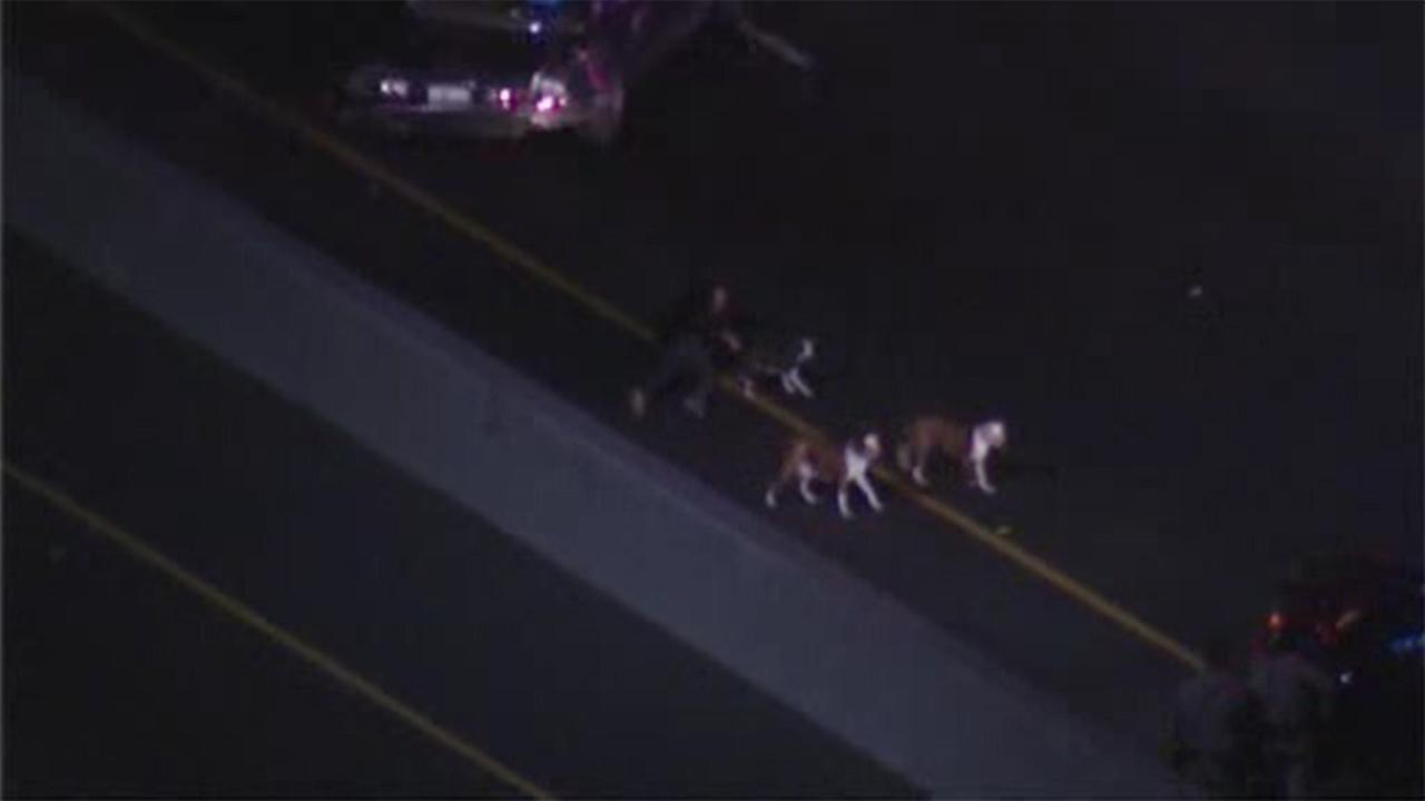 California car police chase ends in dog chase