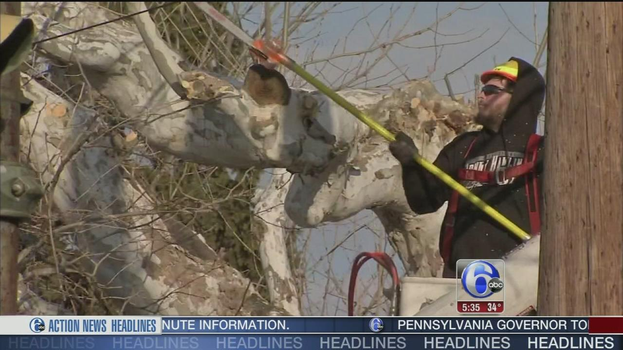 VIDEO: PECO tree prep