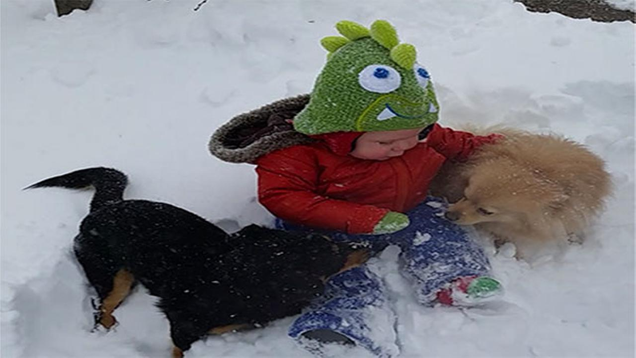 This little one is enjoying snow time with his favorite pups. Brittanee