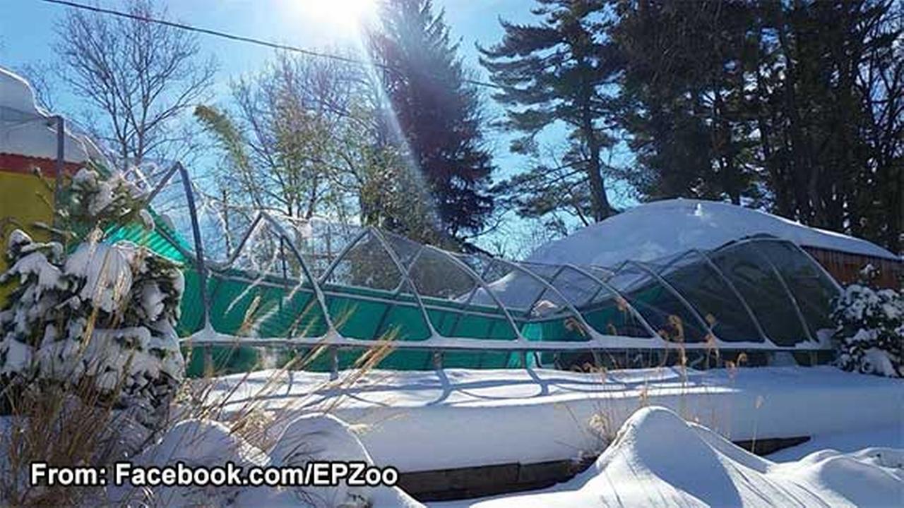 Bird exhibit at Montco zoo collapses under snow