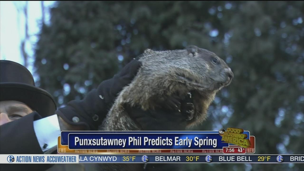 VIDEO: No shadow for Punxsutawney Phil