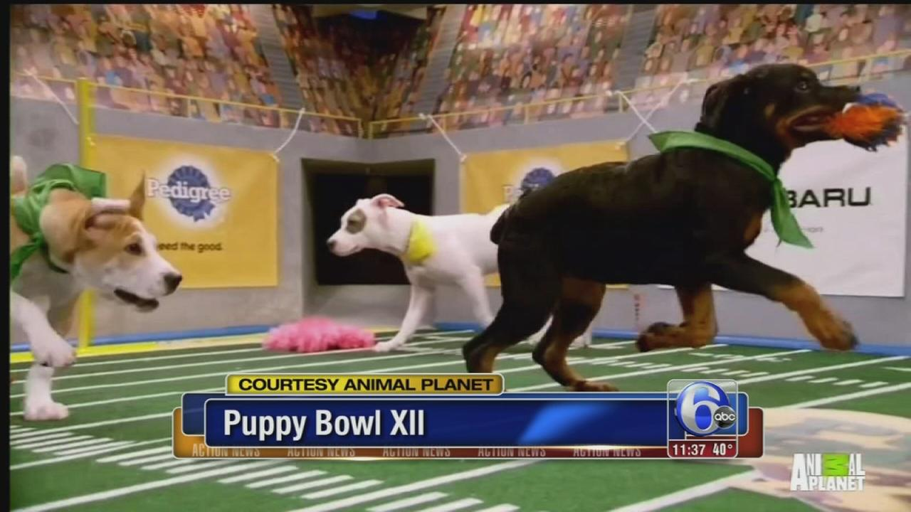 VIDEO: Puppy Bowl XII
