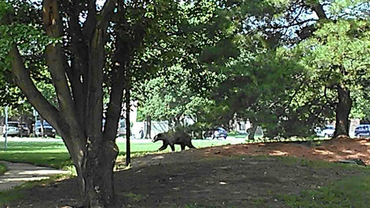 Photos were taken of a bear in Mount Laurel, New Jersey on Tuesday, June 17th.