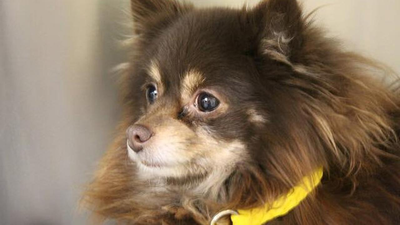 Pinky the dog doing better after left out in cold