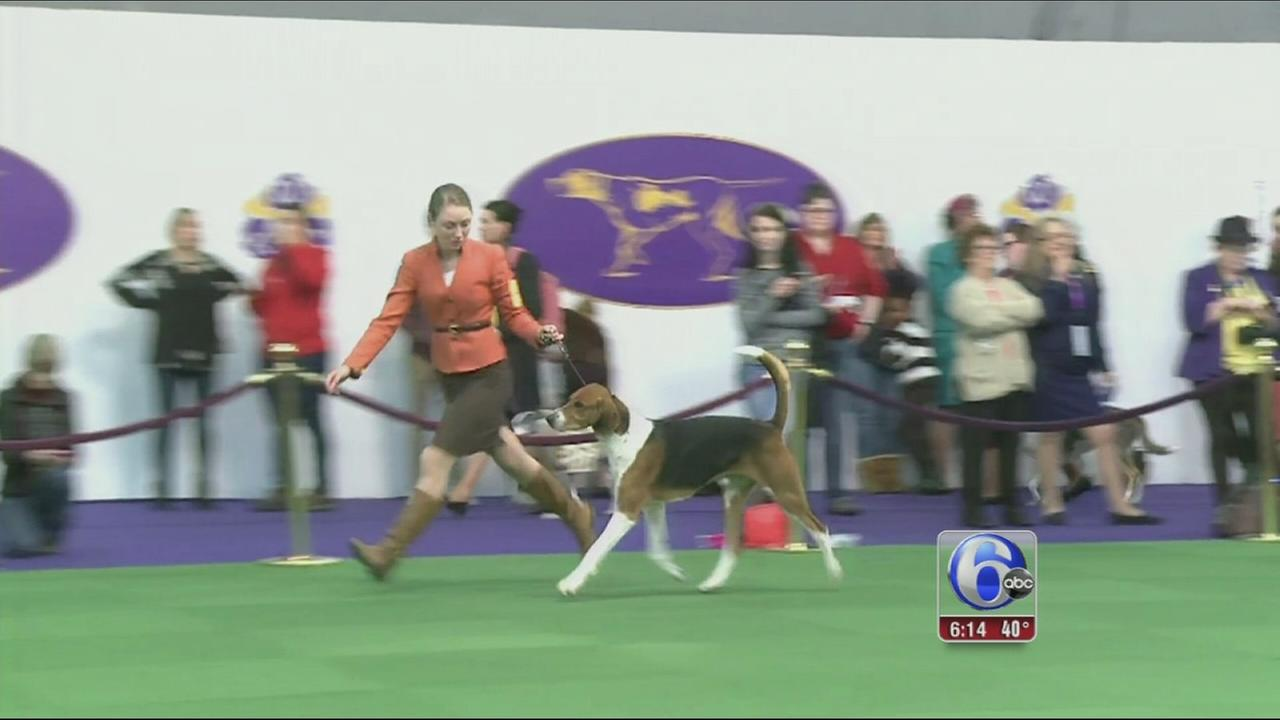 VIDEO: Dog show winner