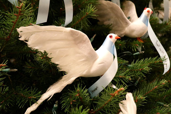 """<div class=""""meta image-caption""""><div class=""""origin-logo origin-image none""""><span>none</span></div><span class=""""caption-text"""">A white dove placed on the Life Celebration by Givnish Memorial Tree in honor of a loved one</span></div>"""