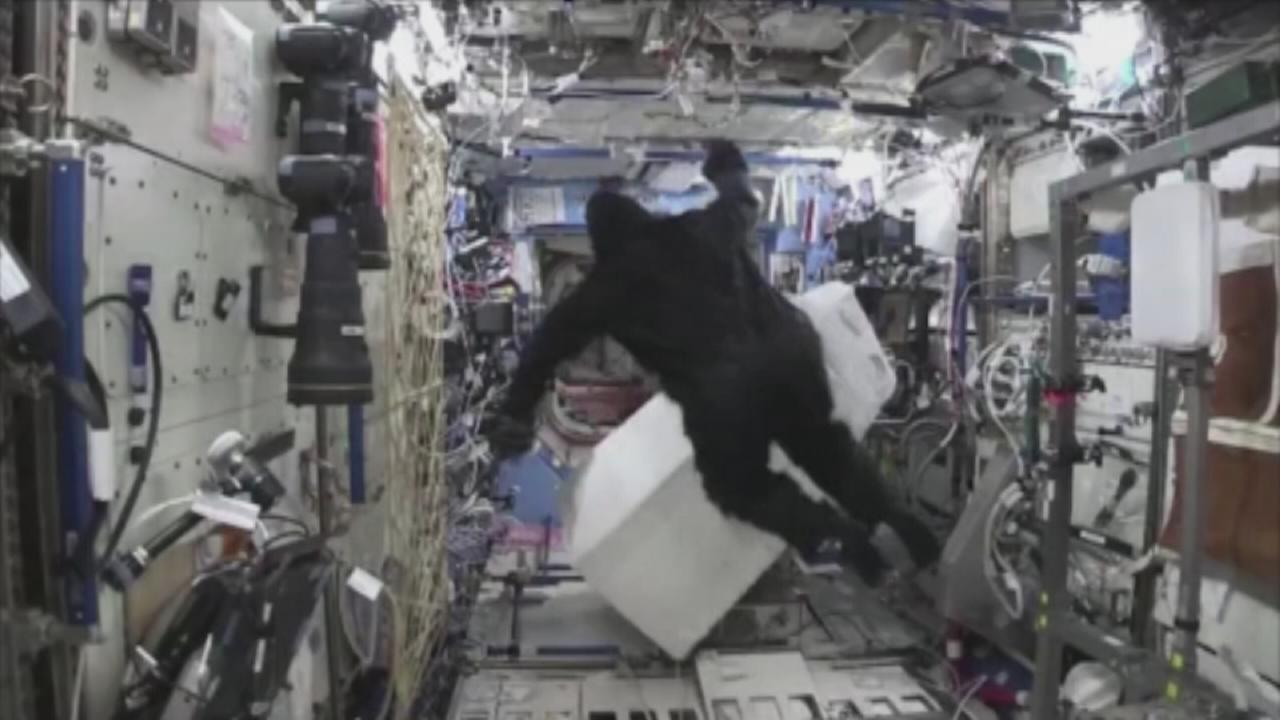 VIDEO: Gorilla spotted on the International Space Station