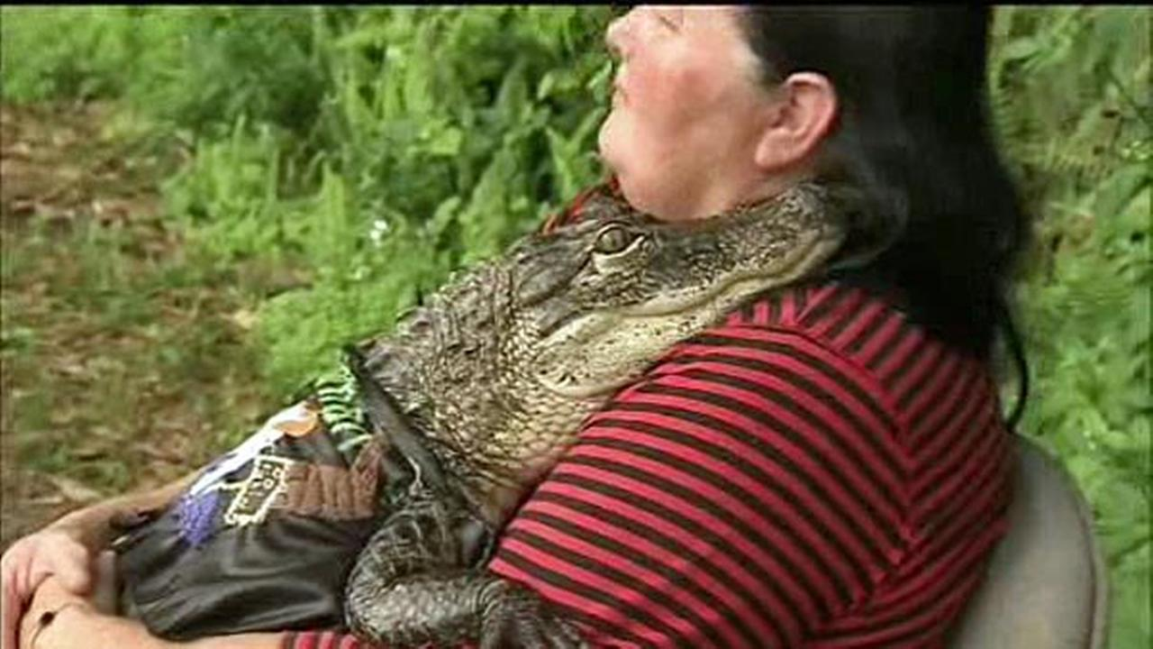 A Florida woman is fighting to keep her 6-foot-long pet alligator in her home.