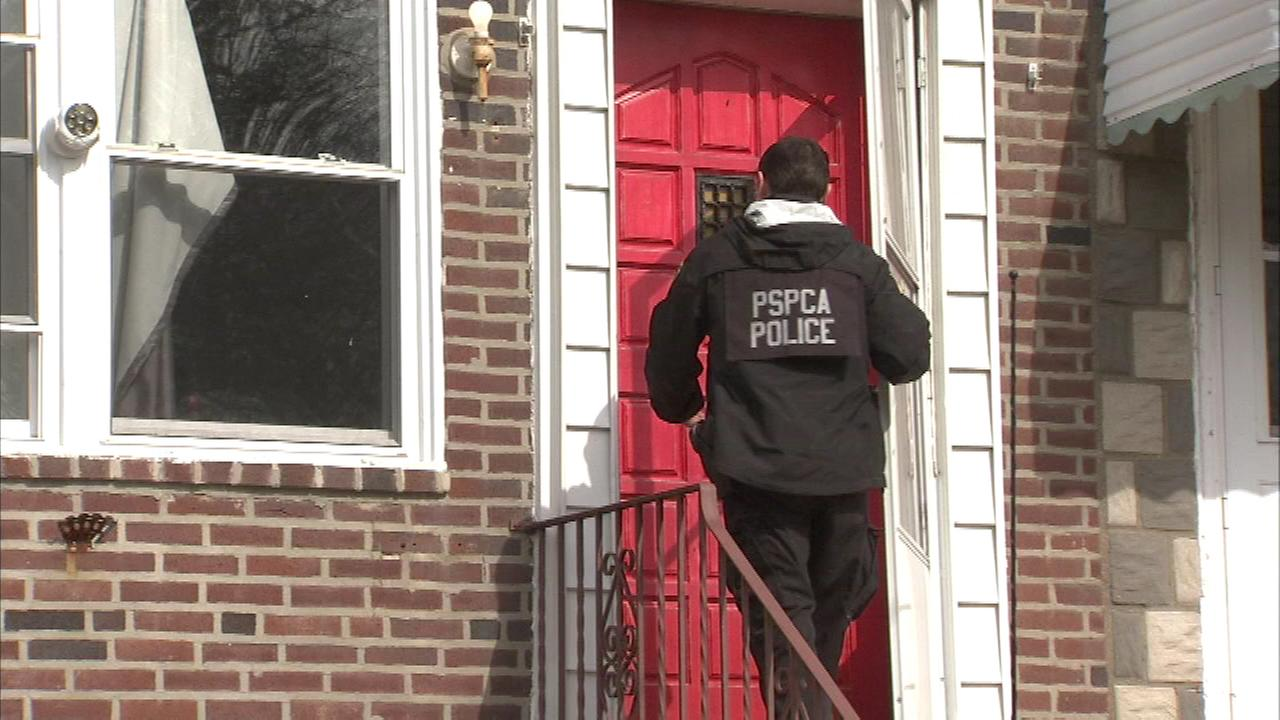 PSPCA officers rescued more than a dozen animals from a home in Holmesburg.