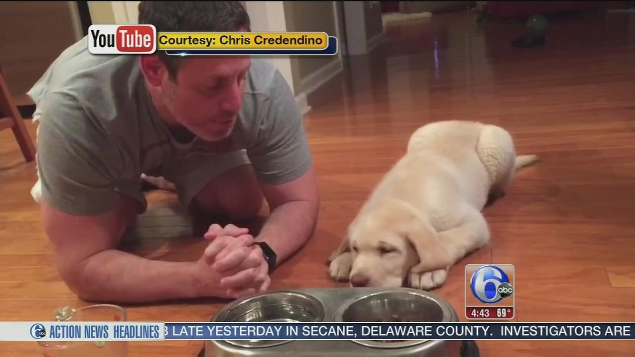 VIDEO: Puppy prays with owner before dinner