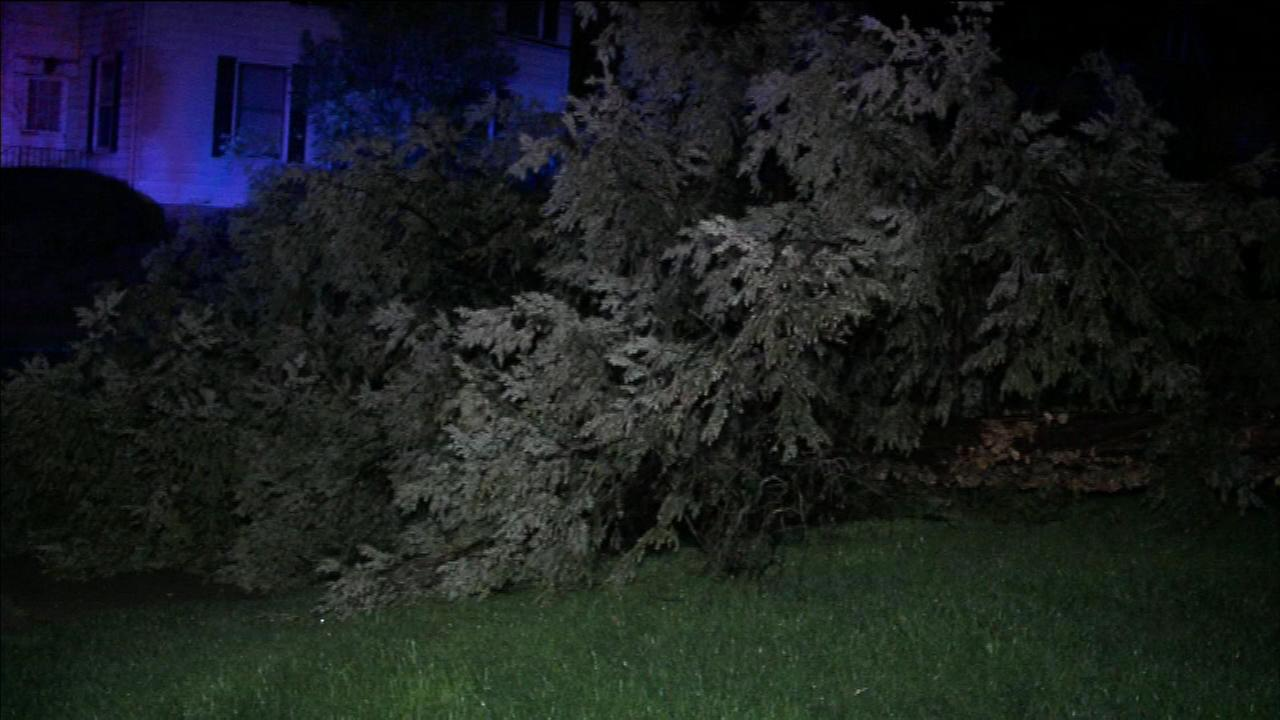 The high winds caused a tree to topple in Collingswood, New Jersey.