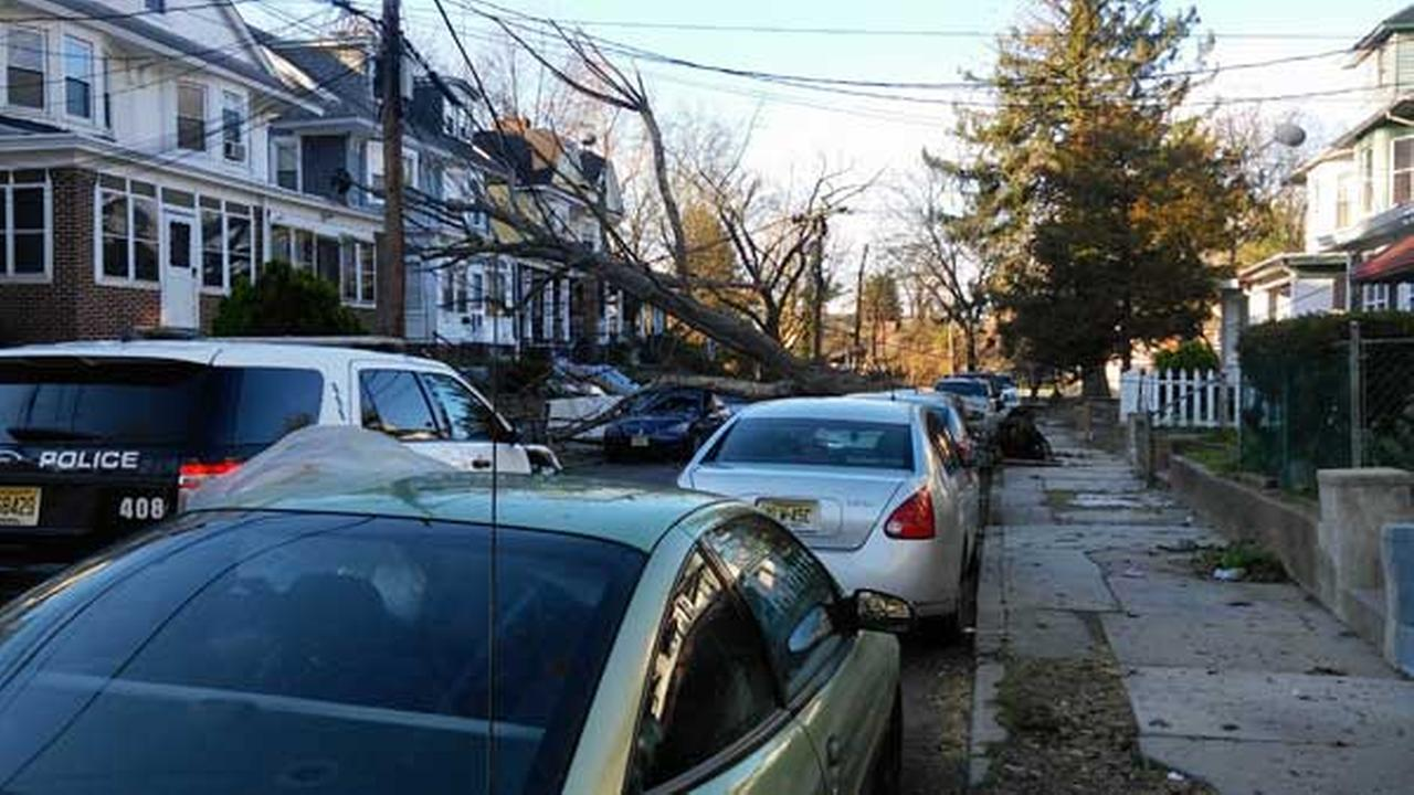 High winds topple a large tree onto a car in Trenton.Shari Alexander