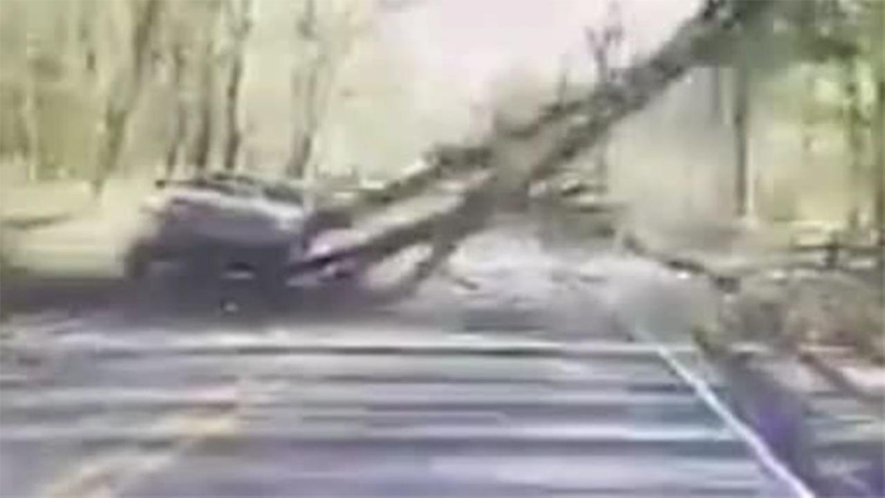 Close call as tree crashes into N.J. road