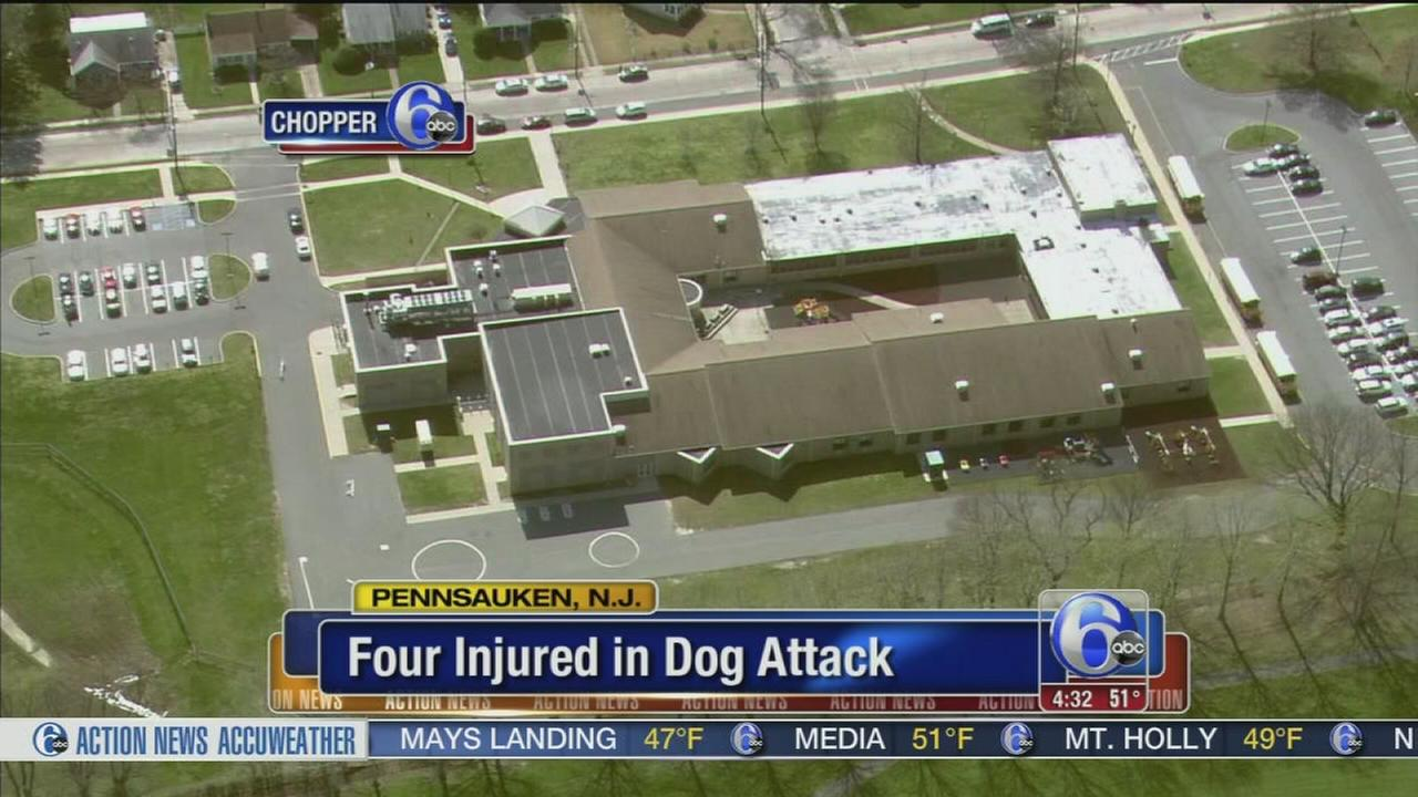 VIDEO: 4 injured in dog attack