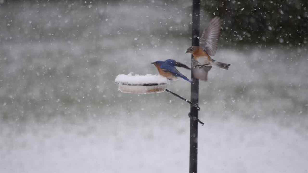 These little birds enjoy a snow day.Lisa Resotko Kruk